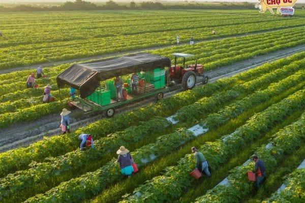 Thủ tục xuất khẩu lao động Úc dành cho người mới
