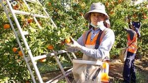 công ty xklđ Úc ANB giới thiệu việc làm lương cao cho người lao động