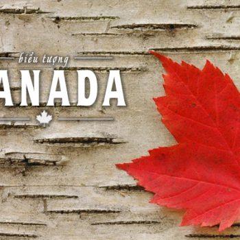 biểu tượng canada, biểu tượng của canada, biểu tượng của nước canada, biểu tượng nước canada, biểu tượng của canada là gì, con vật biểu tượng của canada, bieu tuong canada