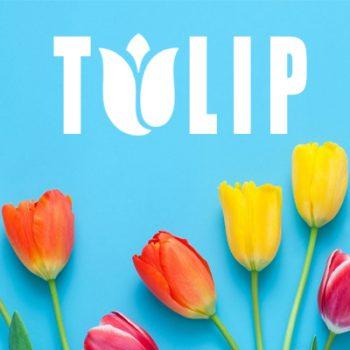 hoa tulip, ý nghĩa hoa tulip, hoa tulip trắng, hoa tulip ở nước nào, hoa tulip vàng, hoa tulip đỏ, hoa tulip đen, hoa tulip hồng, hoa tulip hà lan, hoa tulip ý nghĩa, hoa tulip có ý nghĩa gì, hoa tulip là biểu tượng của nước nào, hoa tulip tượng trưng cho điều gì, hoa tulip của nước nào, hoa tulip ở hà lan, gioi thieu ve hoa tulip, hoa tulip là hoa gì, hoa tulip đẹp nhất thế giới, hoa tulip tượng trưng cho nước nào, hoa tulip ý nghĩa gì, hoa tulip là quốc hoa của nước nào, hoa tulip biểu tượng cho gì, hoa tulip là của nước nào, hoa tulip xuất xứ ở đâu, hoa tulip hà lan tuyệt đẹp, hoa tulip dep nhat the gioi