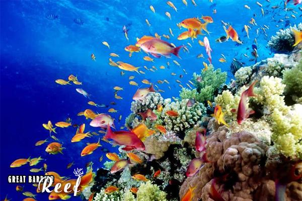 great barrier reef, the great barrier reef, great barrier reef australia, rạn san hô great barrier, rặng san hô great barrier, the great barrier reef là gì, great barrier reef là gì, great barrier reef ở đâu, rạn san hô lớn nhất thế giới đang bị tẩy trắng có tên là:, great barrier, rạn san hô lớn nhất thế giới